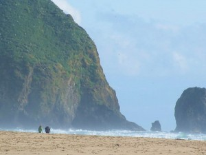 Puffins nesting on Haystack Rock - Cannon Beach