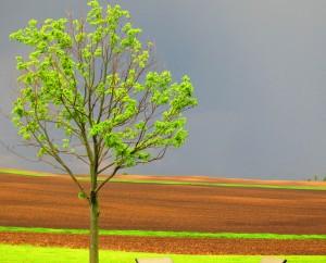 Minnesota farm after a thunderstorm
