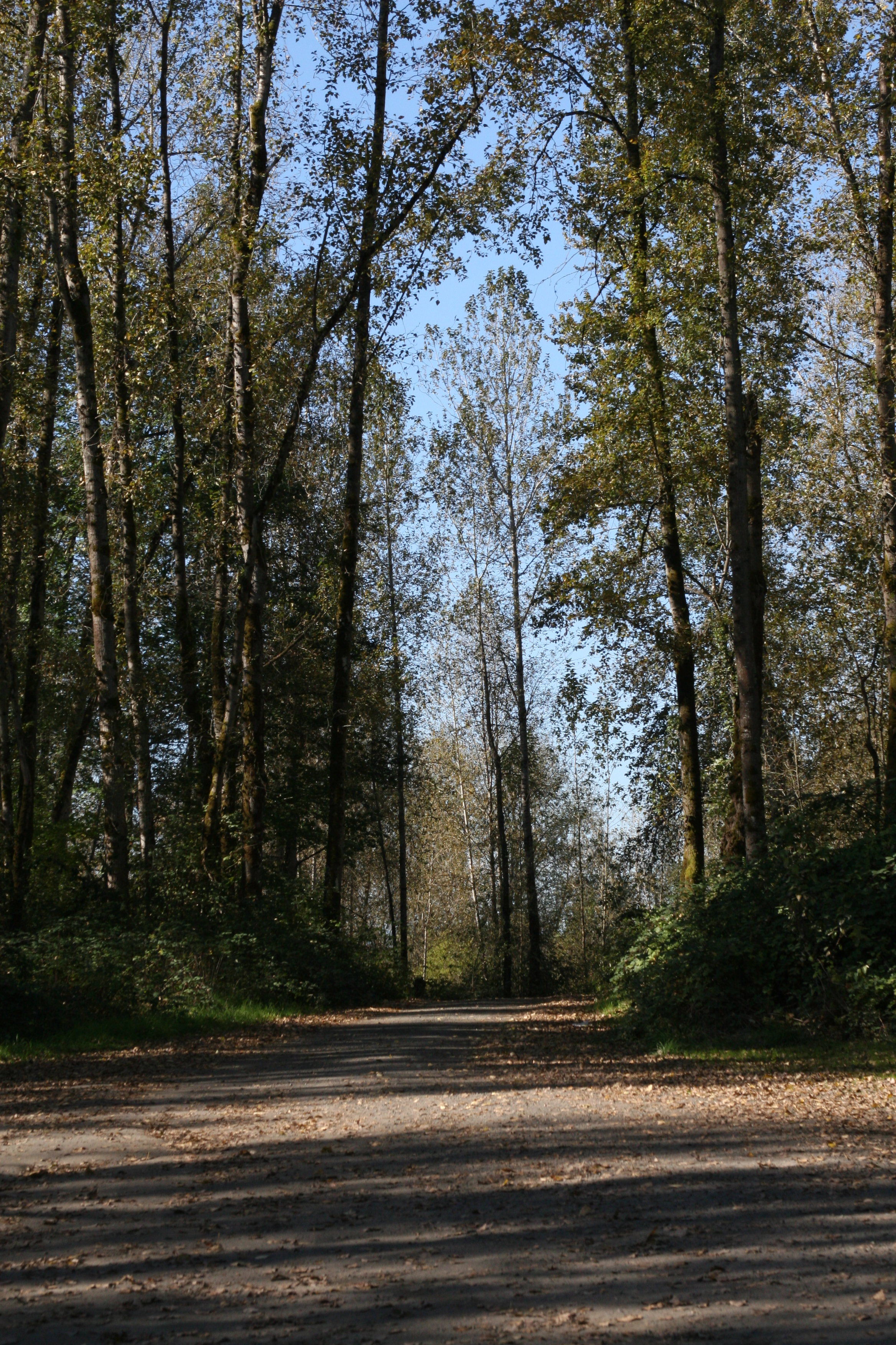 Path through autumn wood on Sauvie Island