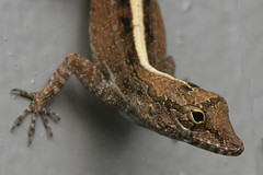 Our friendly neighborhood gecko